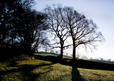 Trees in Silhouette - A Devon Village