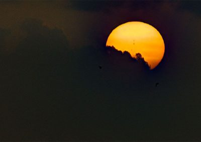 Sunset with Frigate Birds (2) - Carriacou