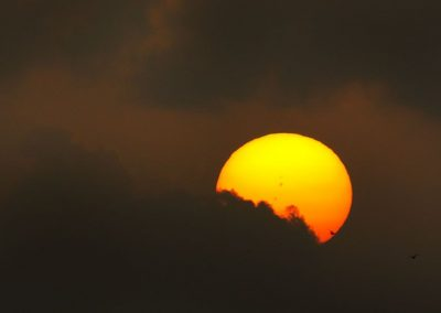 Sunset with Frigate Birds (1) - Carriacou